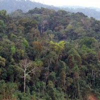 Amazon Rainforest by Martin St-Amant is licensed under CC BY 4.0